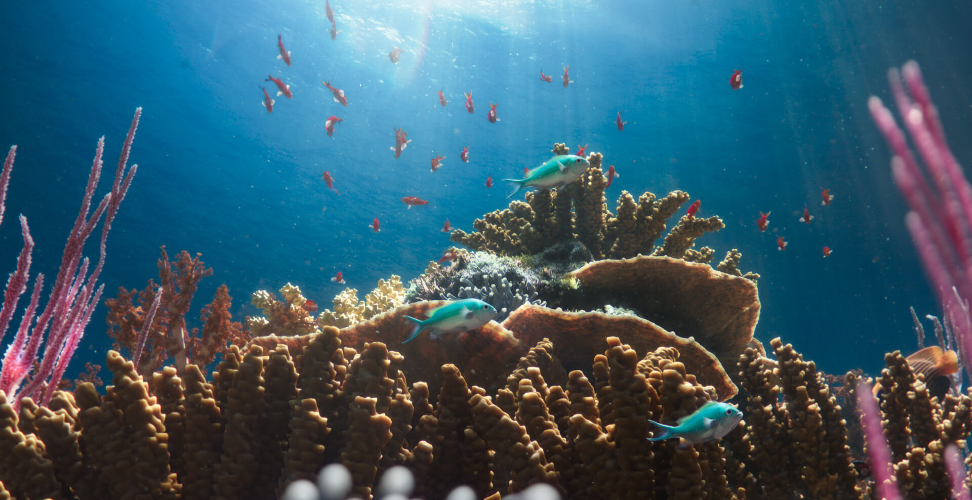 Thriving coral reef with little blue chromis fish